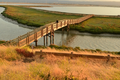 Tidelands Trail in SF Bay NWR. Photo by Ambarish Goswami.