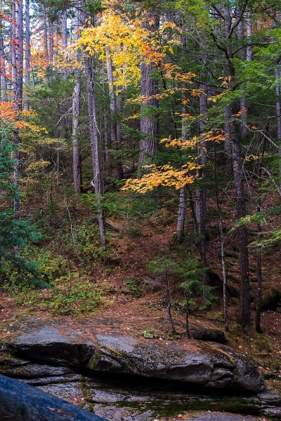 White Mountains National Forest near the Kancamagus Hwy. Photo by Earl Mcgehee.