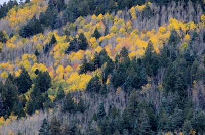 Fall in Apache-Sitgreaves National Forests. Photo by USFS.