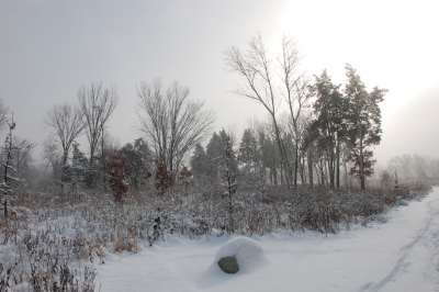 Heroes' Grove at Danada Forest Preserve. Photo by Audra Mason Bonnet.