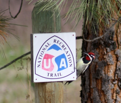 Red-Naped Sapsucker and NRT sign. Photo by Kimi Smith.
