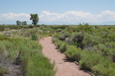 Monte Vista Walking Trail - 7-14-18. Photo by Jim Walla.