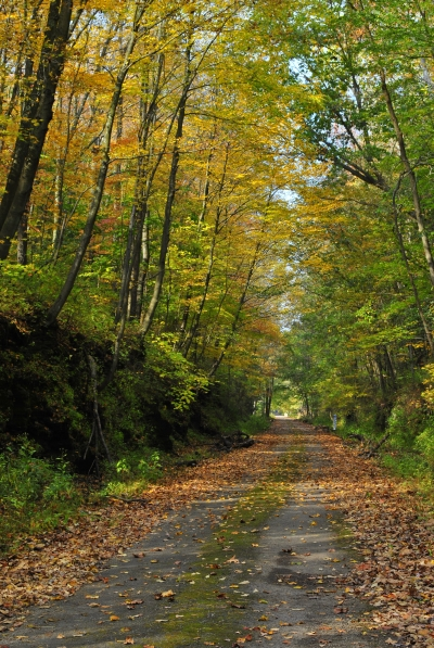West Penn Trail path. Photo by Clare Kaczmarek.