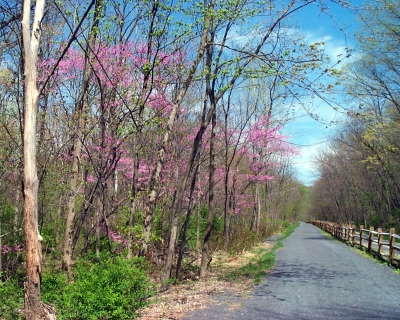 Spring blooms on the Lower Trail.