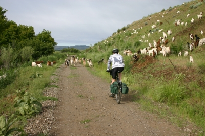 Goat crossing. Photo by Friends of the Weiser River Tr.