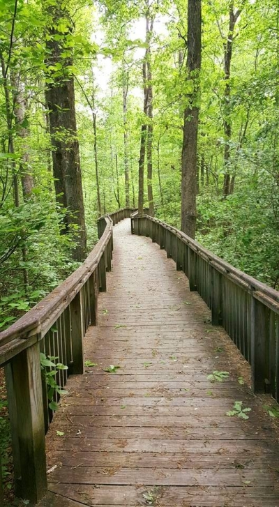 DeSoto State Park's Azalea Cascade Trail. Photo by Tasha Simon.