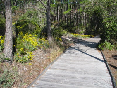 Additional views of wildlife and boardwalks found