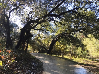 Beautiful leaning oak trees line the preserved Leon Creek Greenway area in urban San Antonio. Photo by Adelyn Alanis.