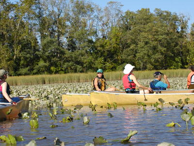 Paddlers take in the beauty of tidal wetlands