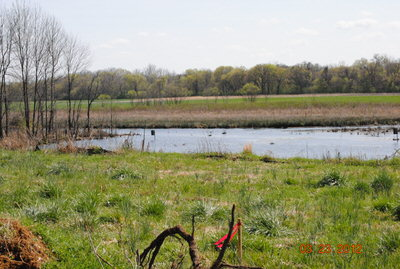 Duck Habitat in memory of Biggie Hunt