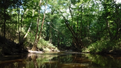 Autauga Creek. Photo by Sheila DeRamus Wood.