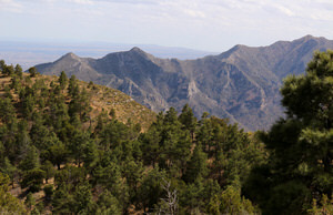 View of Lincoln National Forest from the Guadalupe Ridge Trail, New Mexico.