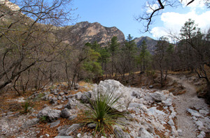 View along Guadalupe Ridge Trail in McKittrick Canyon in Guadalupe Mountains National Park, Texas.  