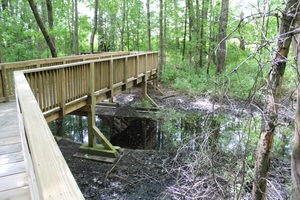 The elevated boardwalk helps to keep the ecological integrity of the wildlife and habitat that surrounds the trail.