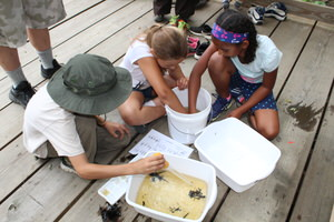 A group of students explore the world of macro-invertebrates while on a field trip to the Fort River Trail.