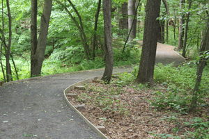 A section of the trail leading through the woods.