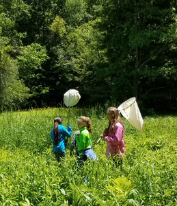 Educ program - students using nets to capture bugs in meadow