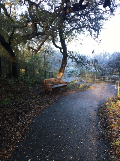 Salado Creek Greenway at Hardberger Trailhead. Photo by Adelyn Alanis.