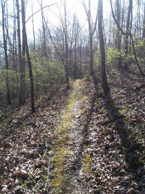 Ozark Trail - Middle Fork. Photo by Terry Hawn.