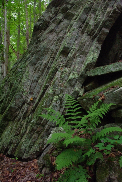 Fern amidst rock layers. Photo by Marty Silver.