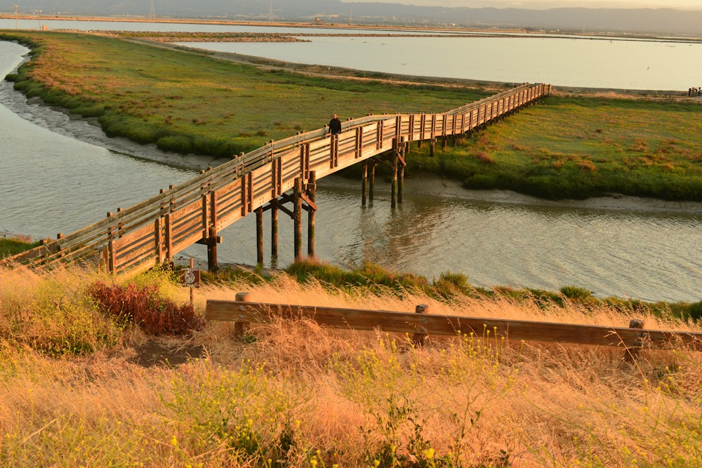 photo: Tidelands Trail in SF Bay NWR. Photo by Ambarish Goswami.
