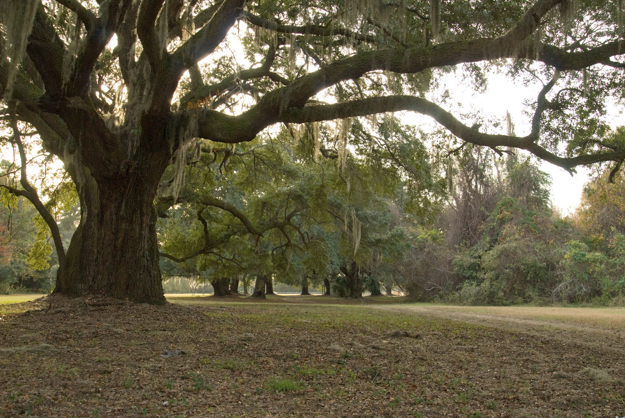 photo: Johns Island County Park (previously Mullet Hall). Photo by Charleston County Park & Rec.