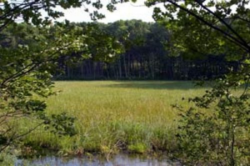 photo: Wetlands along the trail where wild rice grows