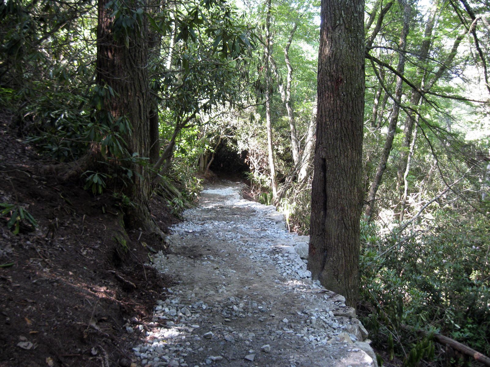 photo: Rhododendren Park Trail. Photo by Hillrie Quin.