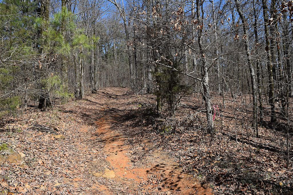 photo: The Rocky Ridge Horse Trail along the northern side of Enid Lake, Mississippi. Photo by Fredlyfish4/wiki.