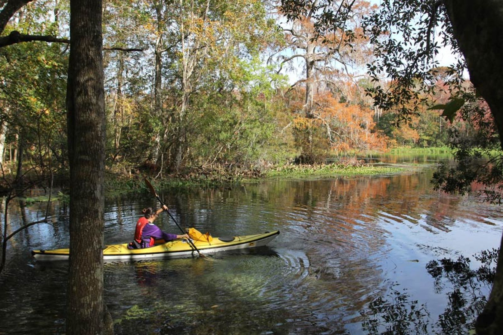 photo: Cypress swamp along the Wacissa Paddling Trail, FL; photo by Doug Alderson