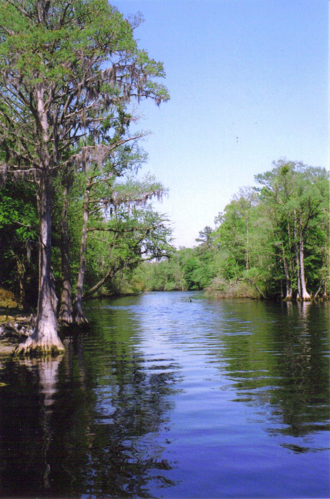 photo: Lumber River State Park. Photo by Dincher wiki.