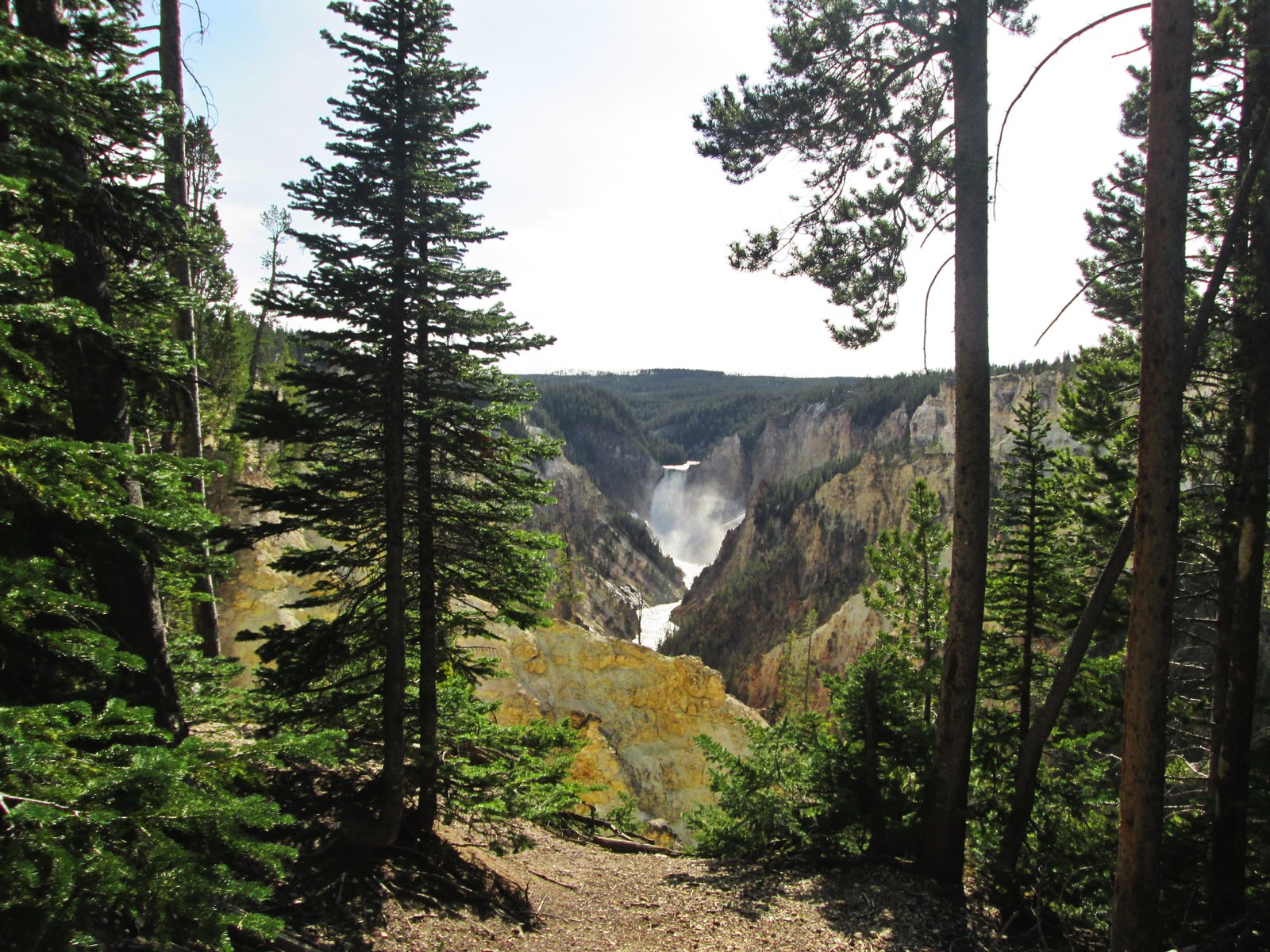 photo: View from the South Rim Trail, near Artist's Point, Yellowstone National Park. Photo by Valerie A. Russo.
