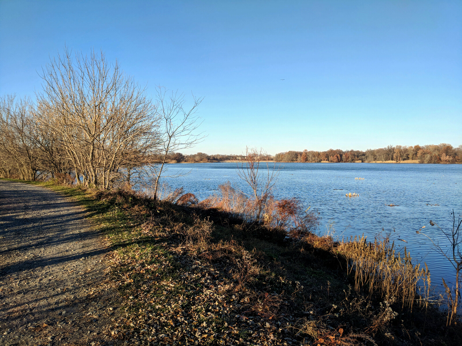 photo: Trail on the west side of the impoundment.  12-1-2017. Photo by Jim Walla.
