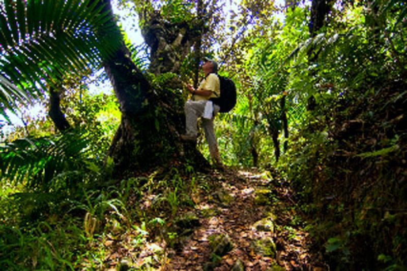 photo: Hiker looking at Palo Colorado, El Yunque National Forest, Puerto Rico -Photo by Jerry Bauer