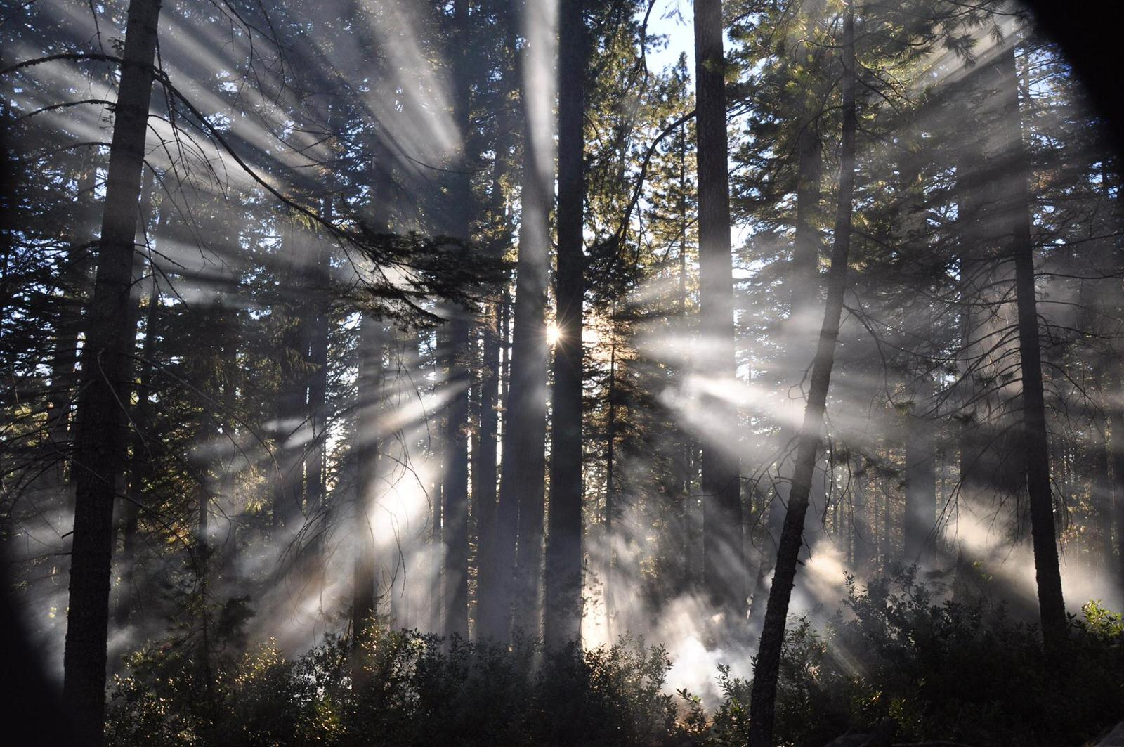 photo: Smoke filters thru trees during a prescribed burn. Photo by USFS.